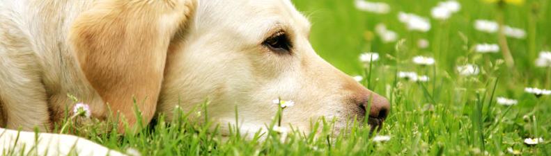 Dogsolution Angebote